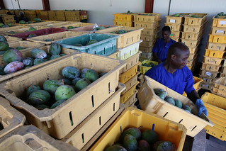 Factory workers producing fresh fruit drinks at Blue Skies, in Nsawan District, Ghana | by World Bank Photo Collection