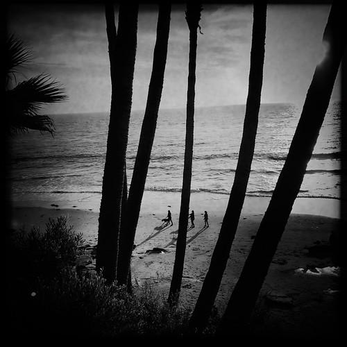 Beach Dog   by karen axelrad (karenaxe)