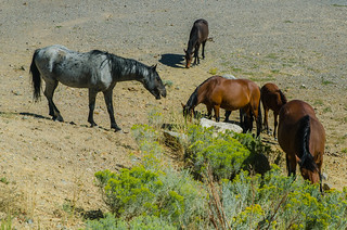 Wild Horses | by www78