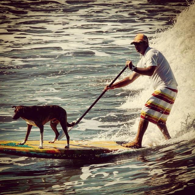 #oceano_brasil #brasilnature #preserveolitoralnorte  #brazilian #praia #beach #praiasdobrasil #brazilianbeach  #olharesemimagens #gordiandoblog #clube_da_foto #respirofotografia #IgersPhotography #detalhes_em_foco #brasilnature #santossp #great_capture_na