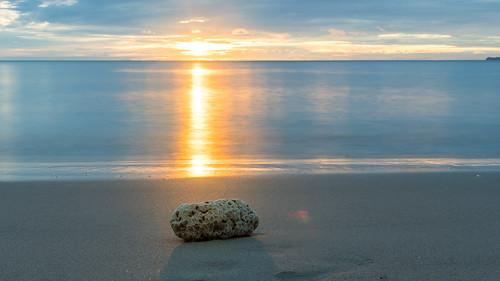 Coral or stone? | by Tom Ek