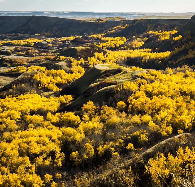 Autumn Poplar Valley