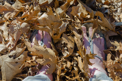 us unitedstates hiking hike missouri ozarks chestnutridge busiekstateforestandwildlifearea ozarkswalkabout journal2015