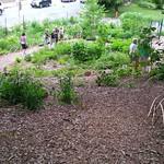 Poplar Hill Garden