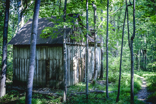 wood trees house abandoned nature virginia us vines woods fuji unitedstates va fujifilm bullrun abandonado theplains broadrun x100s