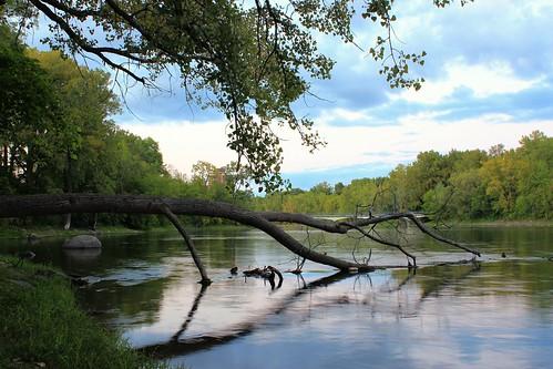 summer sky canada reflection tree nature canon river quebec montreal adil jamai rebelt3i laprairieriver parcnatureîledelavisitation