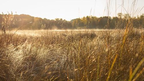 minnesota sunrise october frost lakeshore 2015 fallsunrise anokasandplain uncasdunessna