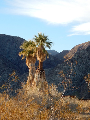 Borrego Palm Canyon Campground - 1