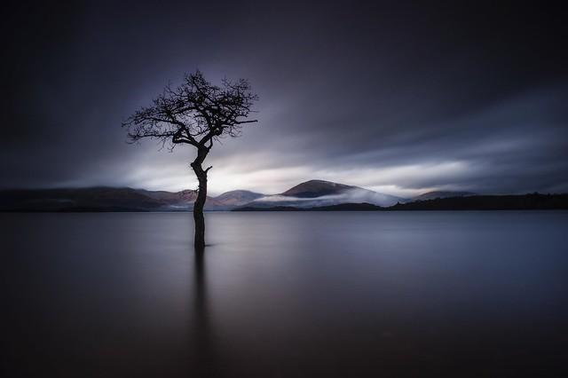The Lonely Tree at Milarrochy Bay Loch Lomond Scotland 12/2015
