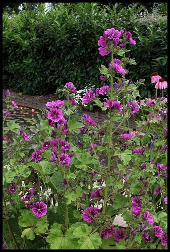 (41) Le potager de couleurs de Chaumont-sur-Loire 2012 22349542619_81bd4a3d66