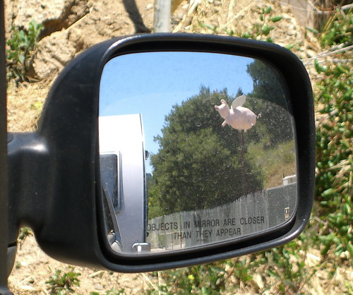 Objects In Mirror...  (Flying Pig)