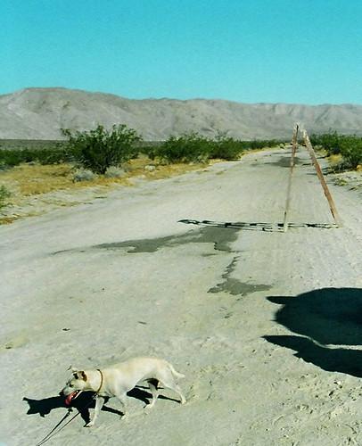 dog desert ladder