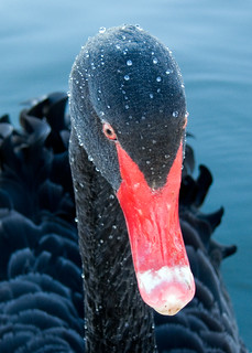 Beaded Swan | by Timmy Toucan