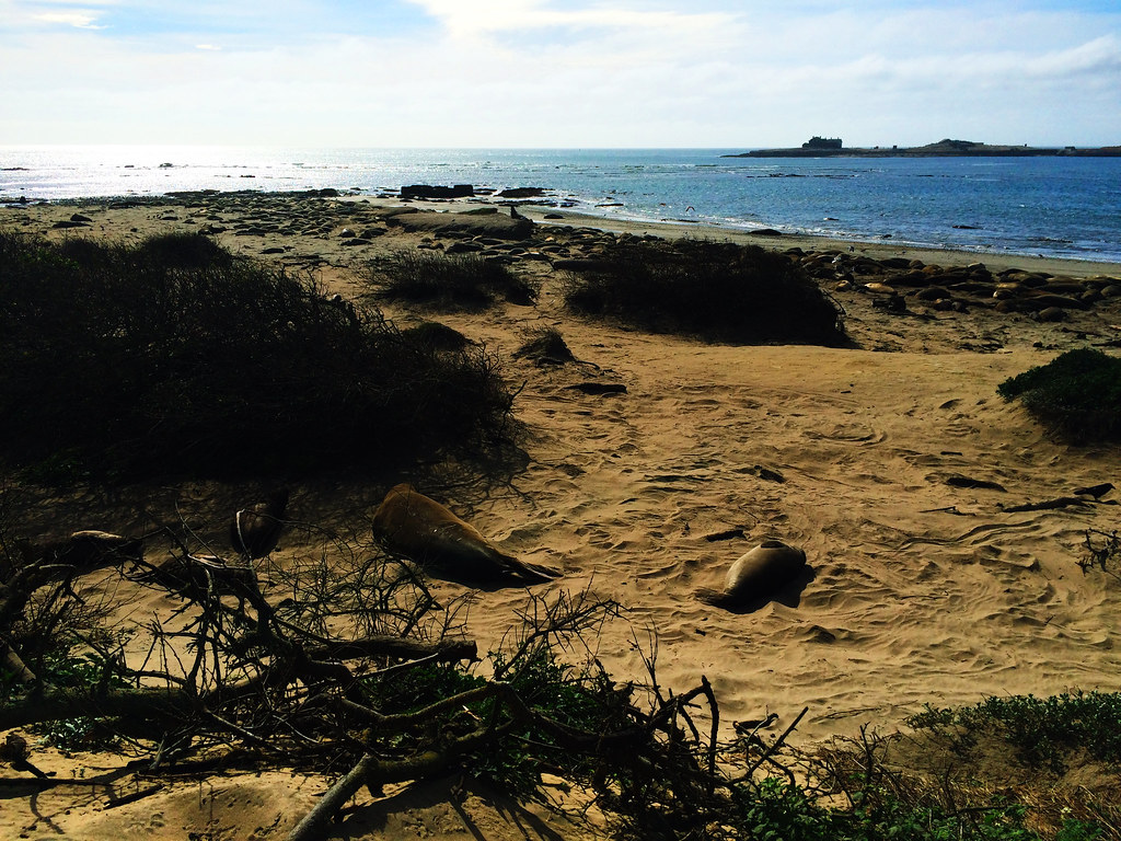 Best Coastal Hikes In California: Año Nuevo State Park, California, USA