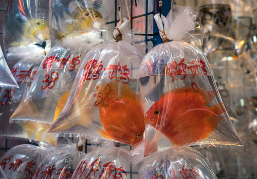 Goldfish in Bags for Sale - Kowloon Pet Market - Hong Kong | by ChrisGoldNY