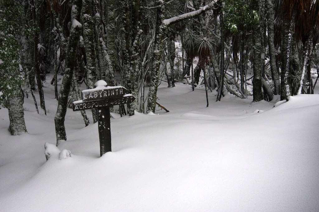 Day 5: Deep morning snow in Pine Valley | The Overland ...