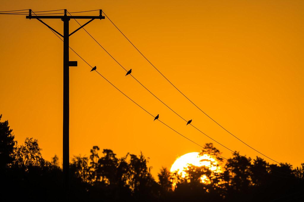 Wired quartet | Morninglight, Sweden | Mikael Järnåsen | Flickr