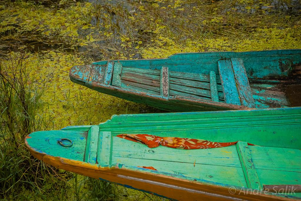 nice color  Шринагар. озеро Дал