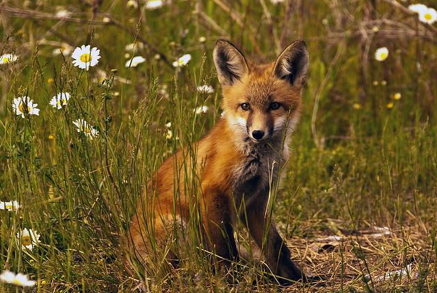 200806-bc-an-fox kits-4185
