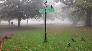 Springfield Park   by j0e_m