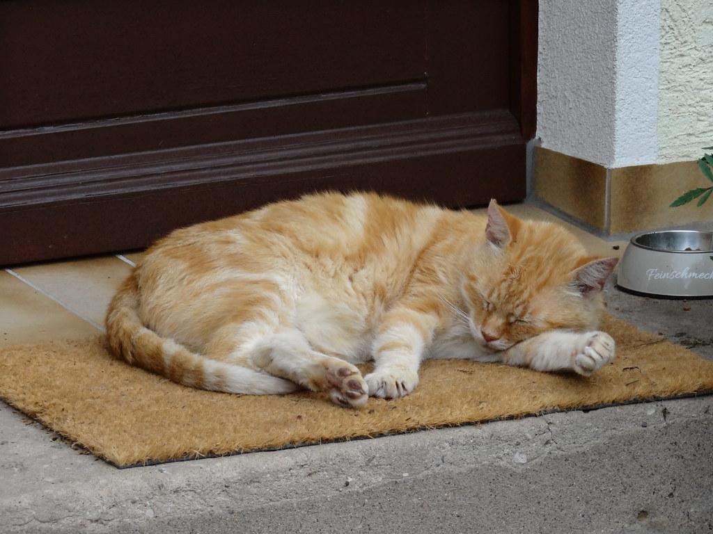 Aller Glanz in Dresden, ergossen der Tau der Frühlingsflur, die Katze liegt vereint beschlossen in dem Kelch der Rose nur 105