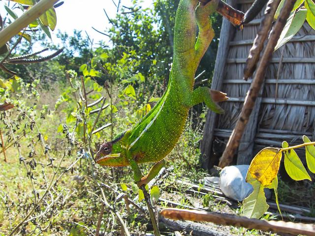 Madagascar9-083.jpg