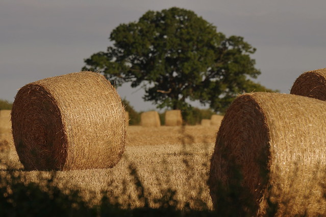 Round Hay Bales, Rutland, England K__35939
