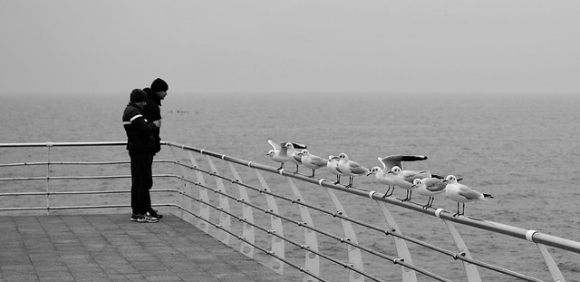 Humans and gulls