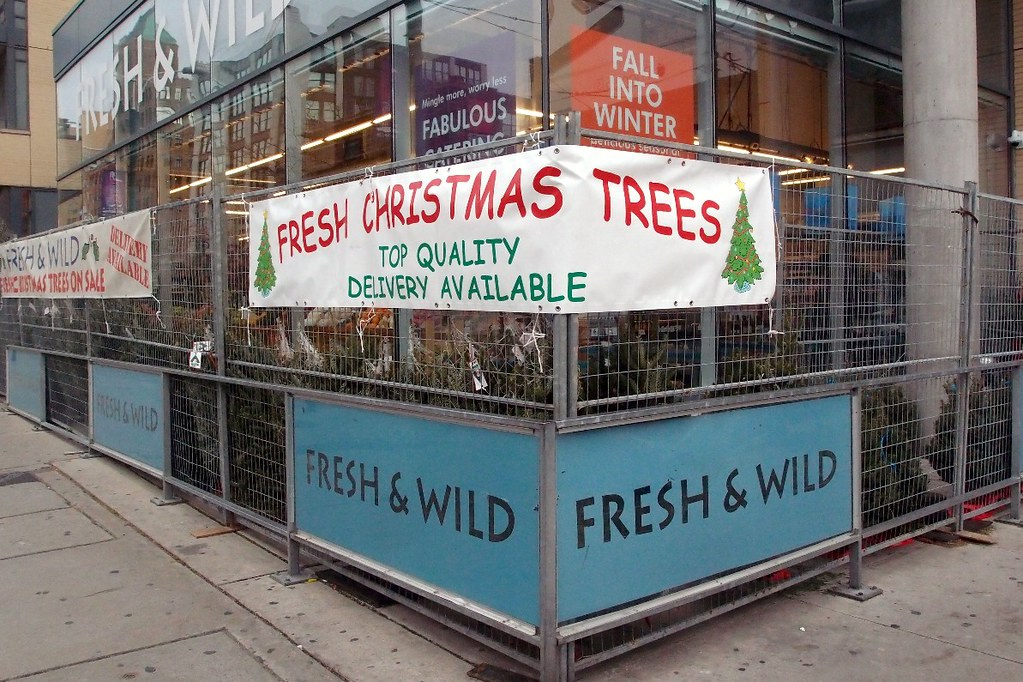 Christmas Trees Sale Fresh Wild King And Spadina Toron