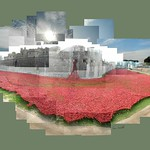Tower of London - carpet of poppies, 2014. More to come from around the Tower.