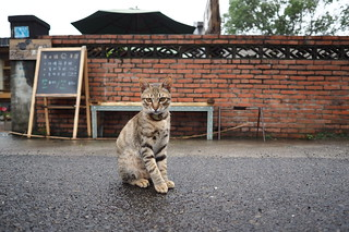 an elegant street cat | by tb2015pnn