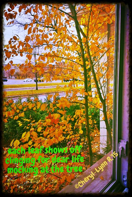 November 6 2015 golden hues hand show off their beauty