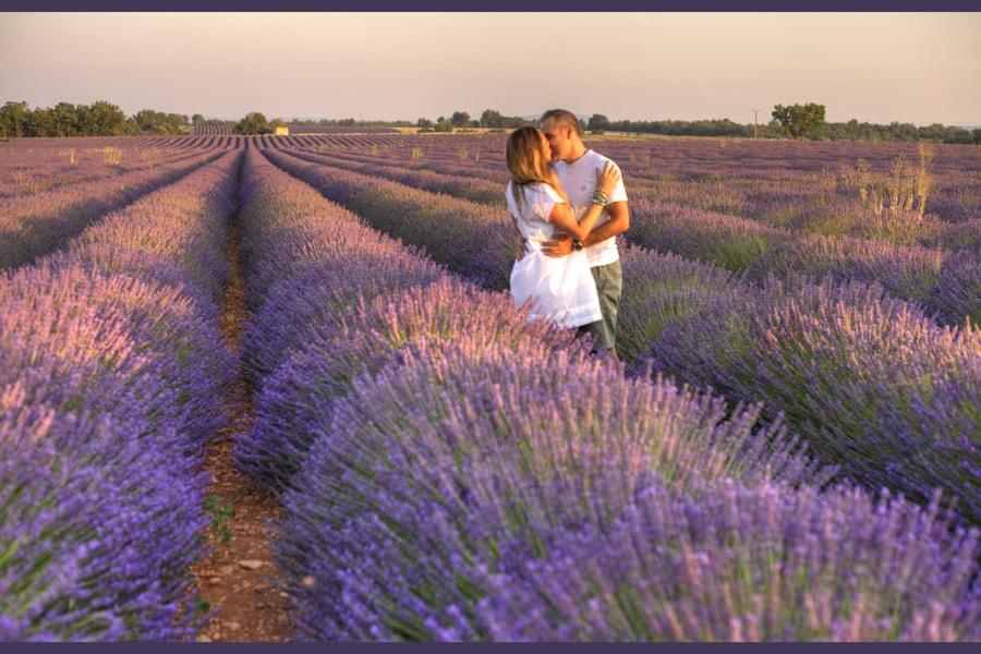 Love in Lavender
