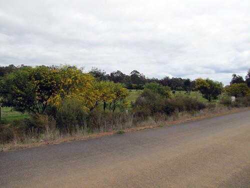 Roadside Revegetation - Red Moon Sanctuary, Redmond Western Australia