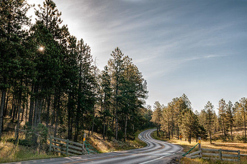 road morning trees sun mountains southdakota blackhills landscape nikon outdoor september custerstatepark mattried nikond300s rockylakesphotography