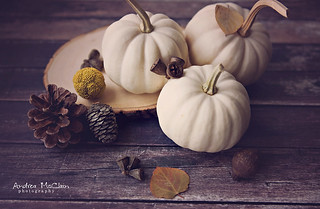 White Pumpkins | by Andrea McClain