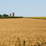 Silos of rural Ontario