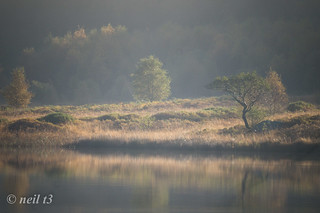 Distant trees over the water | by neil t3