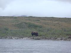 We saw some wildlife