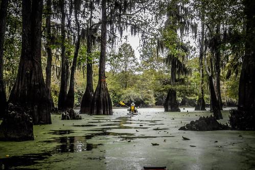 us unitedstates southcarolina kayaking paddling pinewood lcu lowcountryunfiltered sparkleberryswamp fultoncrossroads