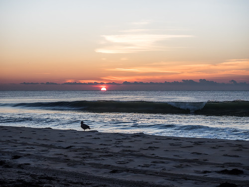 sky seascape clouds sunrise us newjersey sand place unitedstates seagull lbi longbeachisland jerseyshore beachhaven