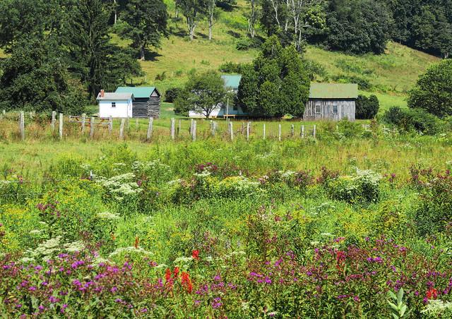 Unplanted Garden
