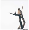 laggar falcon by manivi2325