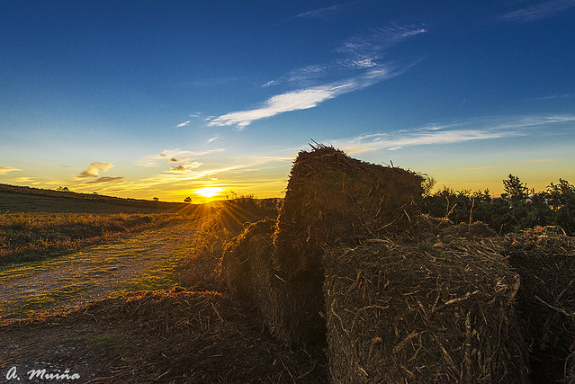 Rollos de biomasa. Biomass roll