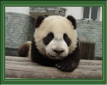 I suggest Panda