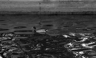 Uptown_4_05_Duck_BW_1938