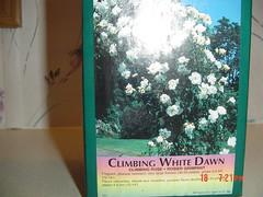Climbing White Dawn