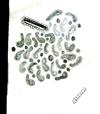Amoeboid