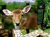 Kuala Lumpur Deer Park