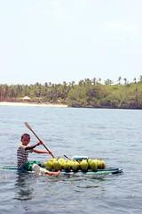 P25 fresh coconuts